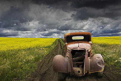 Vintage Chevy Pickup On A Dirt Path Through A Canola Field Poster