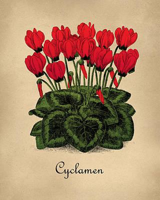 Vintage Cyclamen Botanical Poster by Flo Karp
