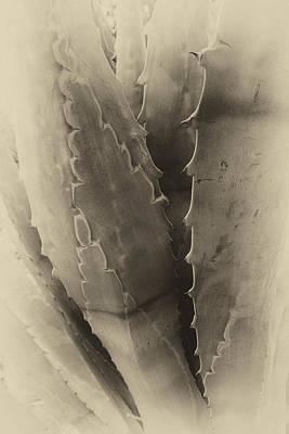 Vintage Desert Plant Poster