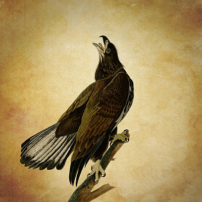 Vintage Eagle Poster by Sheila Savage