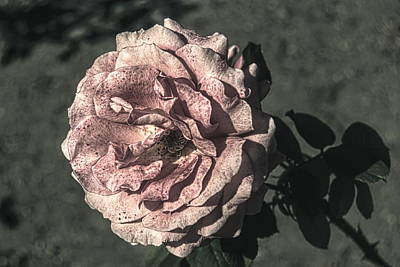 Vintage Flower Poster by John Rossman