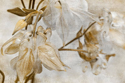 Poster featuring the photograph Vintage Neutral Flowers by Peggy Collins