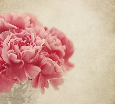 Vintage Pink Carnations Poster by Kim Hojnacki