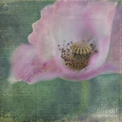 Vintage Poppy Poster by Priska Wettstein