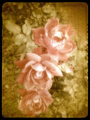 Vintage Pink Roses Shabby Chic  Poster