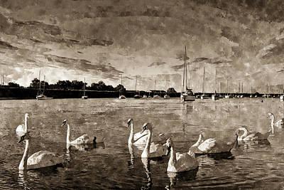 Vintage Swan Painting Poster by David Pyatt