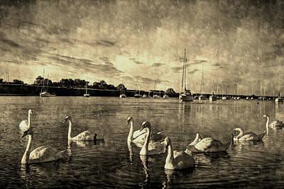 Vintage Swans Poster by David Pyatt