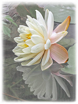 Vintage Water Lily Reflections Poster