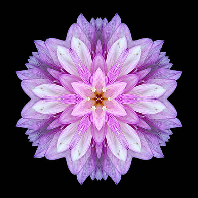 Violet Dahlia I Flower Mandala Poster
