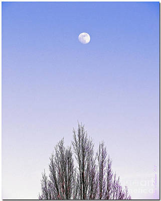 Poster featuring the photograph Violet Moon And Treetop by Chris Anderson