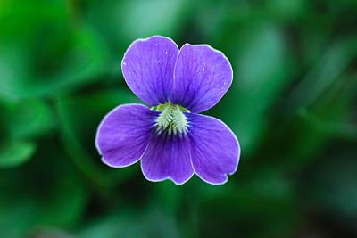 Violet Splendor Poster