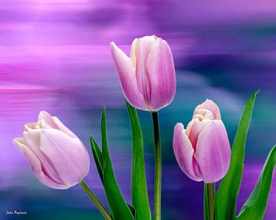 Violet Tulips Poster