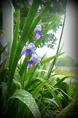 Poster featuring the photograph Iris With Dew by Laurie Perry
