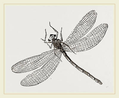 Virgin Dragon-fly Poster