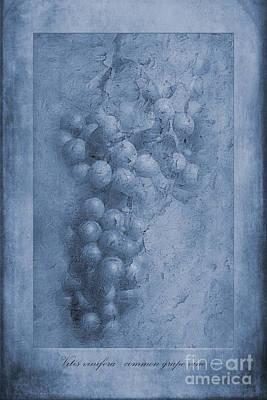 Vitis Cyanotype Poster by John Edwards