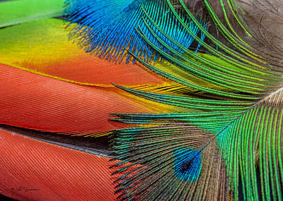 Vivid Colored Feathers Poster