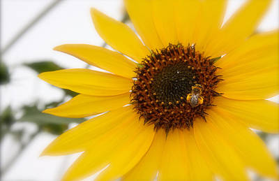 Poster featuring the photograph Vivid Sunflower With Bee Fine Art Nature Photography  by Jerry Cowart