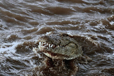 Voracious Crocodile In Water Poster