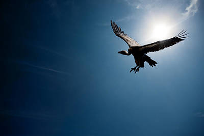 Vulture Flying In Front Of The Sun Poster by Johan Swanepoel