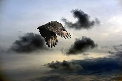 Vulture Sky Poster