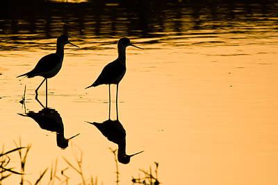 Wading Birds Poster by Nila Newsom