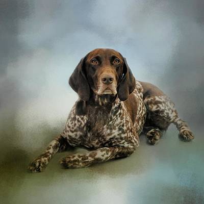 Waiting For A Cue - German Shorthaired Pointer Poster by Jai Johnson