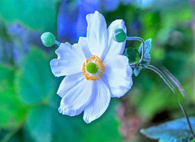 Flower 13 Poster