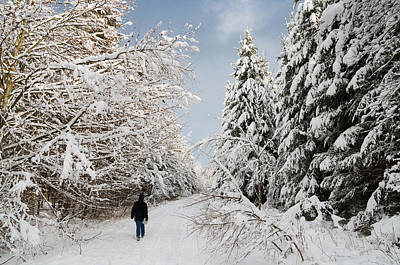 Walk In The Winterly Forest With Lots Of Snow Poster