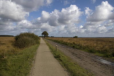 walking and cycling path in the nature area Dwingelderveld in Ruinen Netherlands Poster
