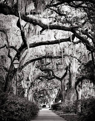 Walking In Forsyth Park In Black And White Poster