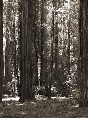 Walking In The Redwoods 4 Poster by Mike McGlothlen