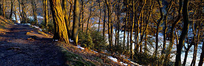 Walkway Passing Through The Forest Poster by Panoramic Images