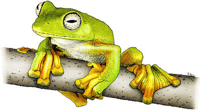 Wallaces Flying Frog Poster by Roger Hall