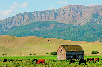 Wallowa Mountains And Barn In Field Poster by Nik Wheeler