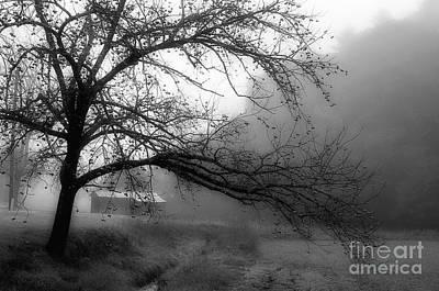 Walnut Tree Along The Creek Poster by Michael Eingle