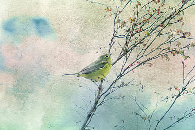 Warbler In A Huckleberry Bush Poster by Peggy Collins
