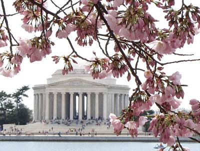 Poster featuring the photograph Washington Dc In Bloom by Jennifer Wheatley Wolf