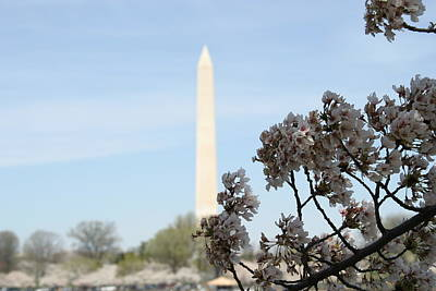 Washington Monument - Cherry Blossoms - Washington Dc - 011313 Poster by DC Photographer