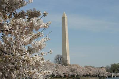 Washington Monument - Cherry Blossoms - Washington Dc - 011317 Poster