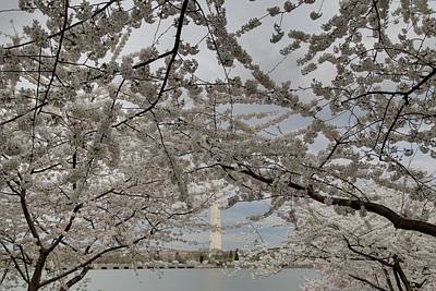 Washington Monument - Cherry Blossoms - Washington Dc - 011323 Poster by DC Photographer