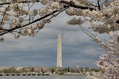 Washington Monument - Cherry Blossoms - Washington Dc - 011326 Poster by DC Photographer