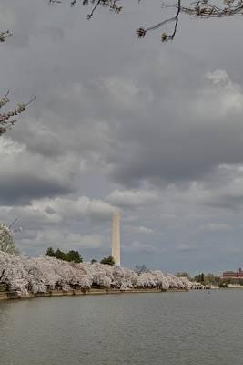 Washington Monument - Cherry Blossoms - Washington Dc - 011332 Poster by DC Photographer