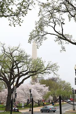 Washington Monument - Cherry Blossoms - Washington Dc - 011346 Poster