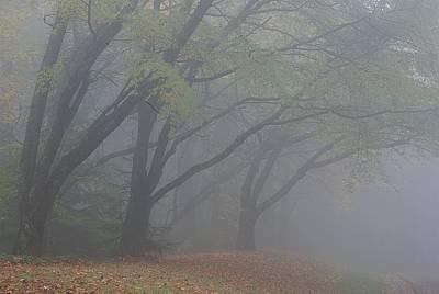 Washington Park Fog 1 Poster