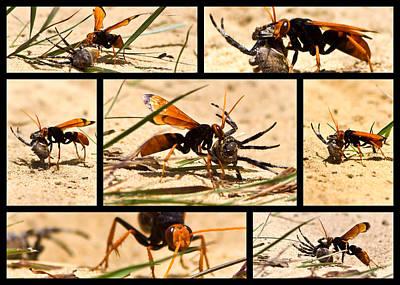 Wasp And His Kill Poster by Miroslava Jurcik