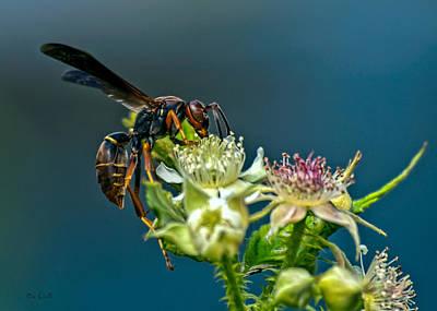 Wasp Poster by Bob Orsillo