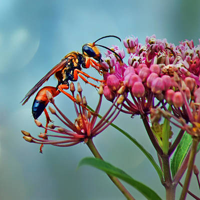 Wasp On Milkweed Poster by Nikolyn McDonald