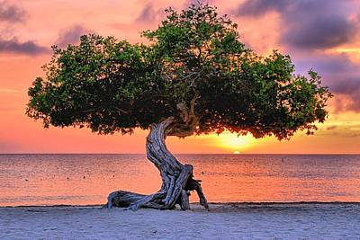 Watapana Tree - Aruba Poster