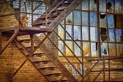 Watchcat Poster by Nikolyn McDonald