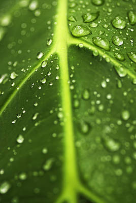 Water Drops On A Leaf Poster